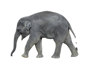 elefant_edited.png