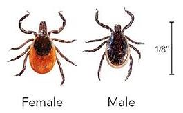 ticks.png