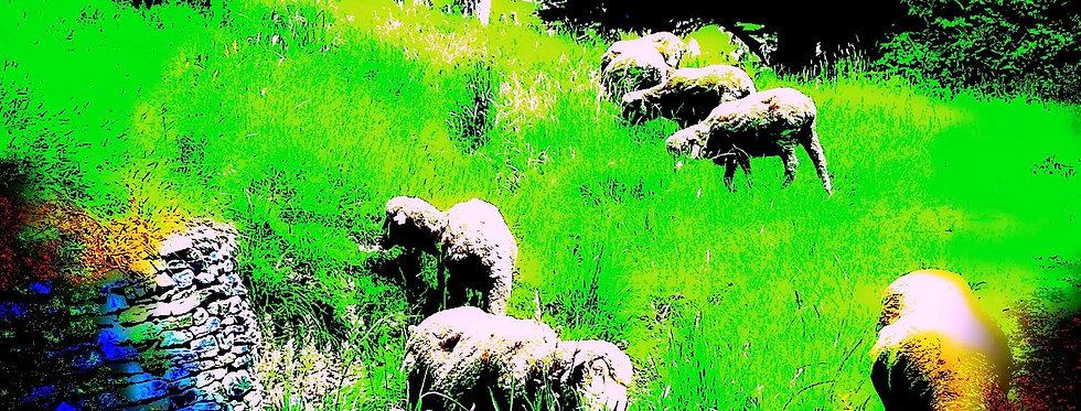 CEMETARY SHEEP
