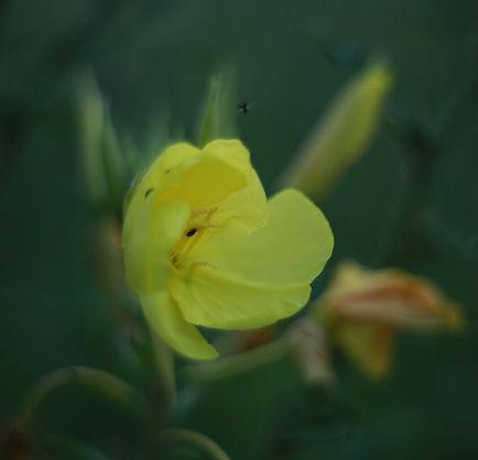 žlutá květina_edited.jpg