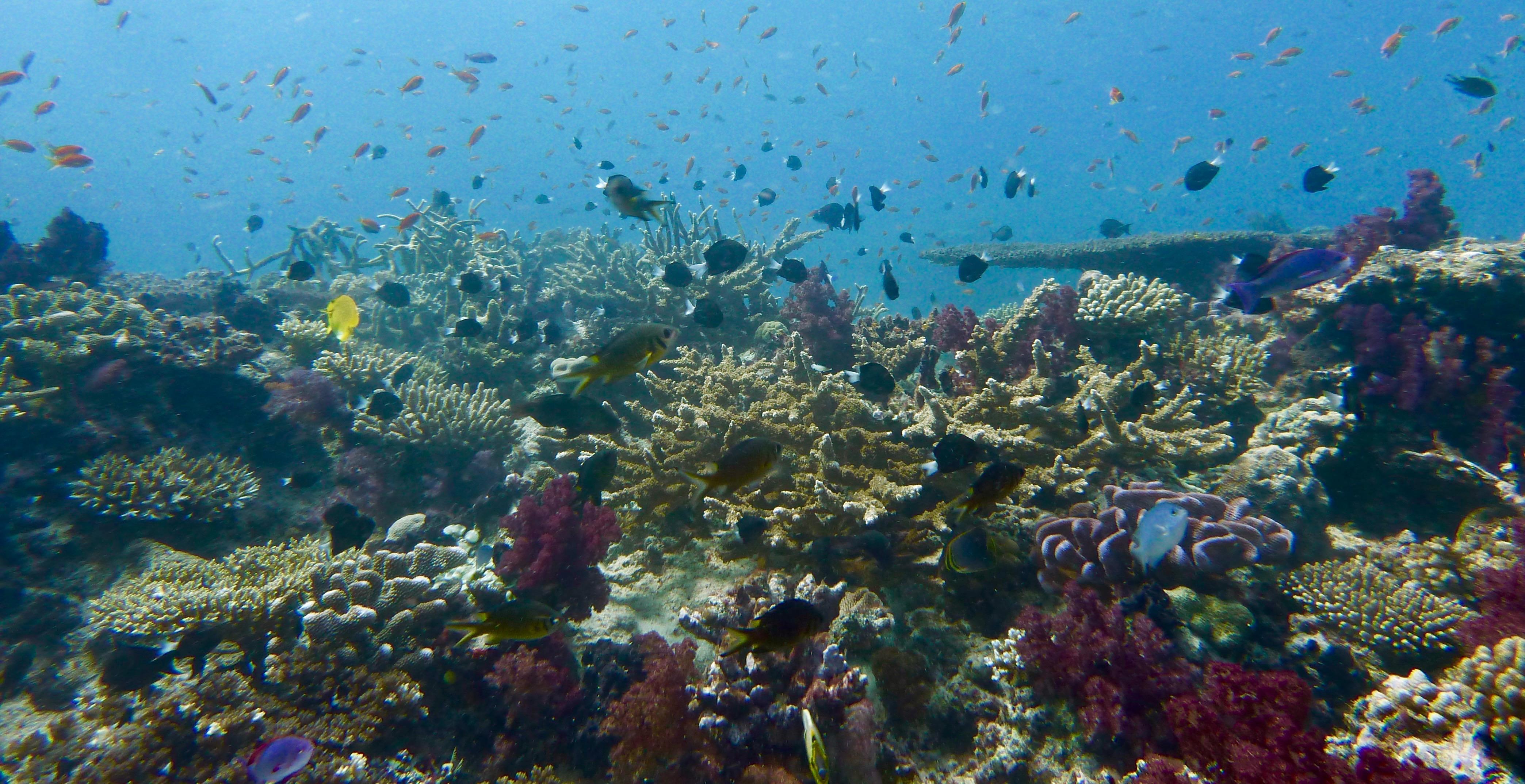 Reef atom