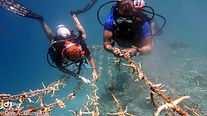 Coral Nursery Cleaning.jpg