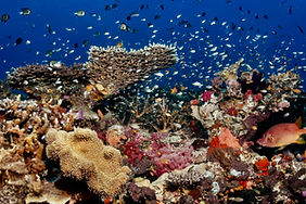 Colourful Rainbow Reef