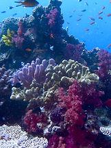 Rainbow Reef Colours