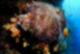 Clownfish White Wall
