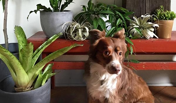 houseplant & pets 2.PNG