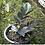 Thumbnail: Zamioculcas Zamiifolia 'Raven'