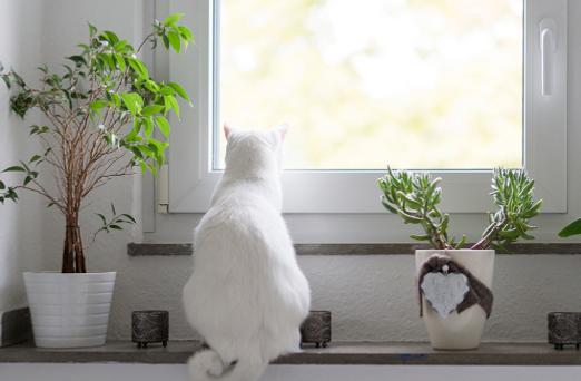 houseplant & pets 3.PNG
