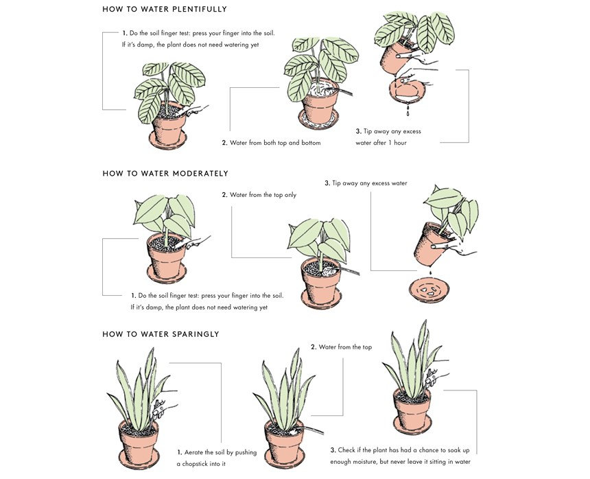 How to water your plants (so you don't k