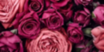 Roses 1.jpg