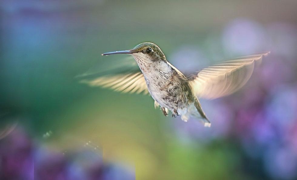 hummingbird-5477966_1920.jpg