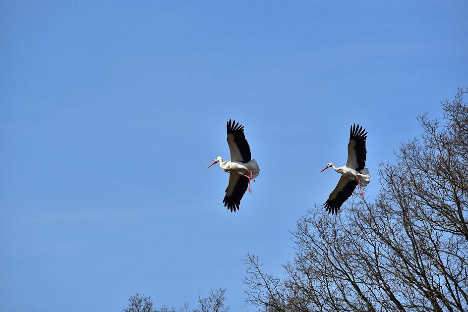 stork-1288604_1920.jpg