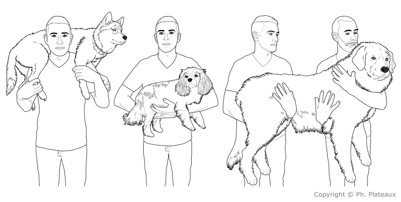 illustration médicale vétérinaire