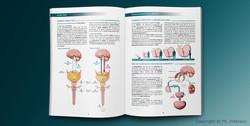 illustration_medicale_urologie_03