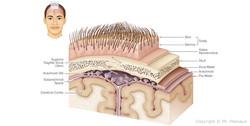 illustration_medicale_sophysa02-B