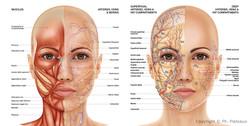 illustration_medicale_chirurgie_esthetiq