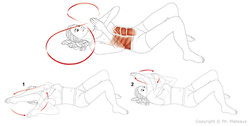 illustration médicale anatomie