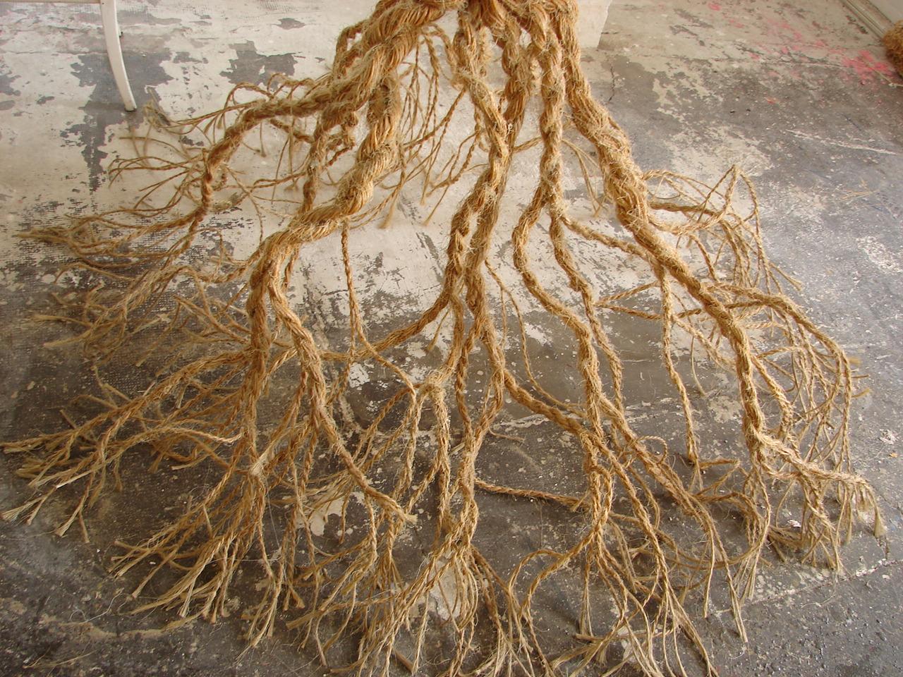 arbre corde