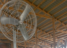 Basket fan for cow shed