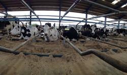 Comfortable cows by CowPlan Ltd. UK.