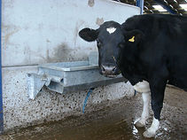 Aqua-tip wall mounted cow water trough