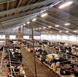 180 cow robot unit