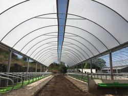Long - Troy Farm - Poly Tunnel