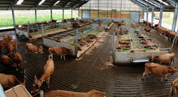 Jersey cow robot unit - Cow Plan Ltd