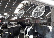 Panel fan for cow shed
