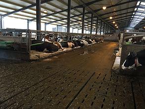 Milk robot unit - comfortable cows
