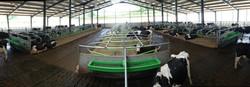 Milk robot unit for 360 cows