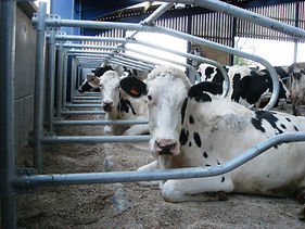 Cow cubicles by CowPlan - #comfycows