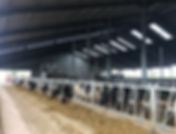 Holditch Court Farm