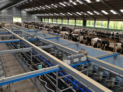 300 cow new dairy unit