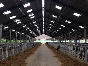 New cow shed by Cow Plan Ltd.