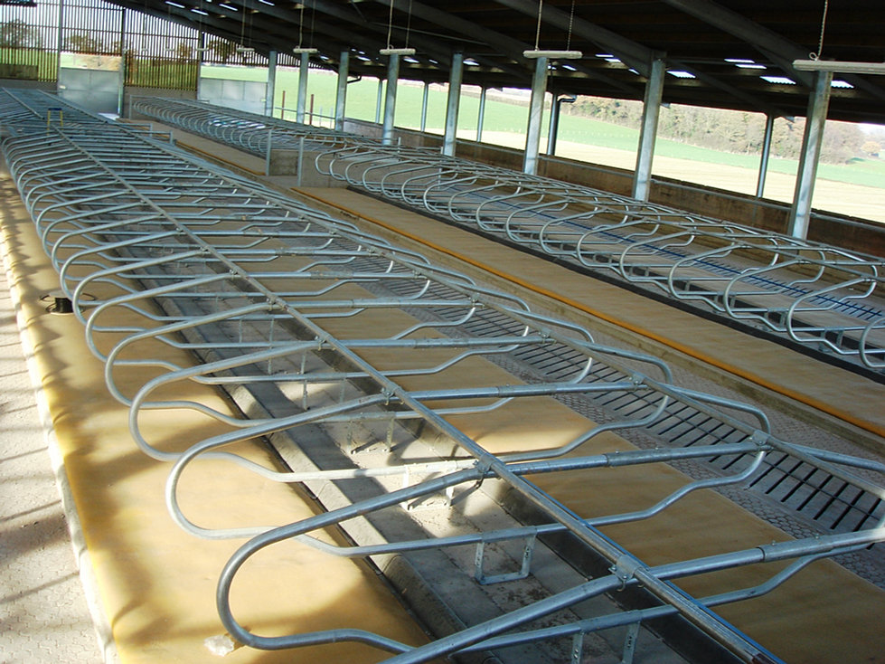 Dairy Housing Design For Cow Comfort