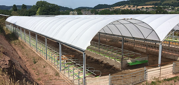 Poly Tunnel cow cubicle housing installed 2016 / 2017