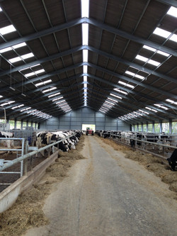 300 cow dairy housing