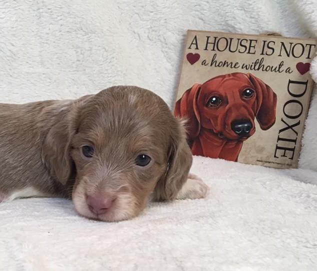 Cookie & Happy Puppy - 8.28.17