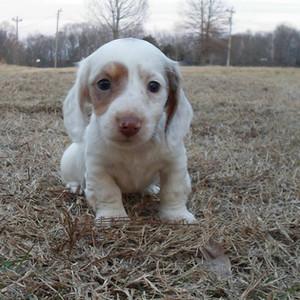 Polka Dottie Puppy - 10.26.14