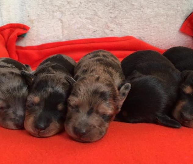 Stella Puppies - 4.8.18