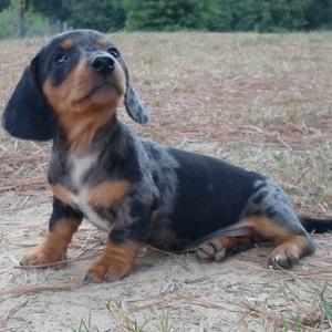 Daisy & Sinister Puppy - 8.13.14