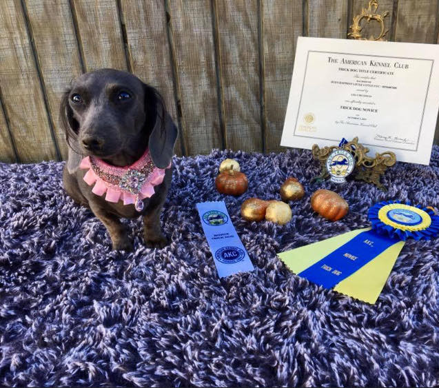 Canine Good Citizens Title