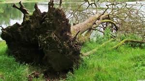 Storm Fallen Tree