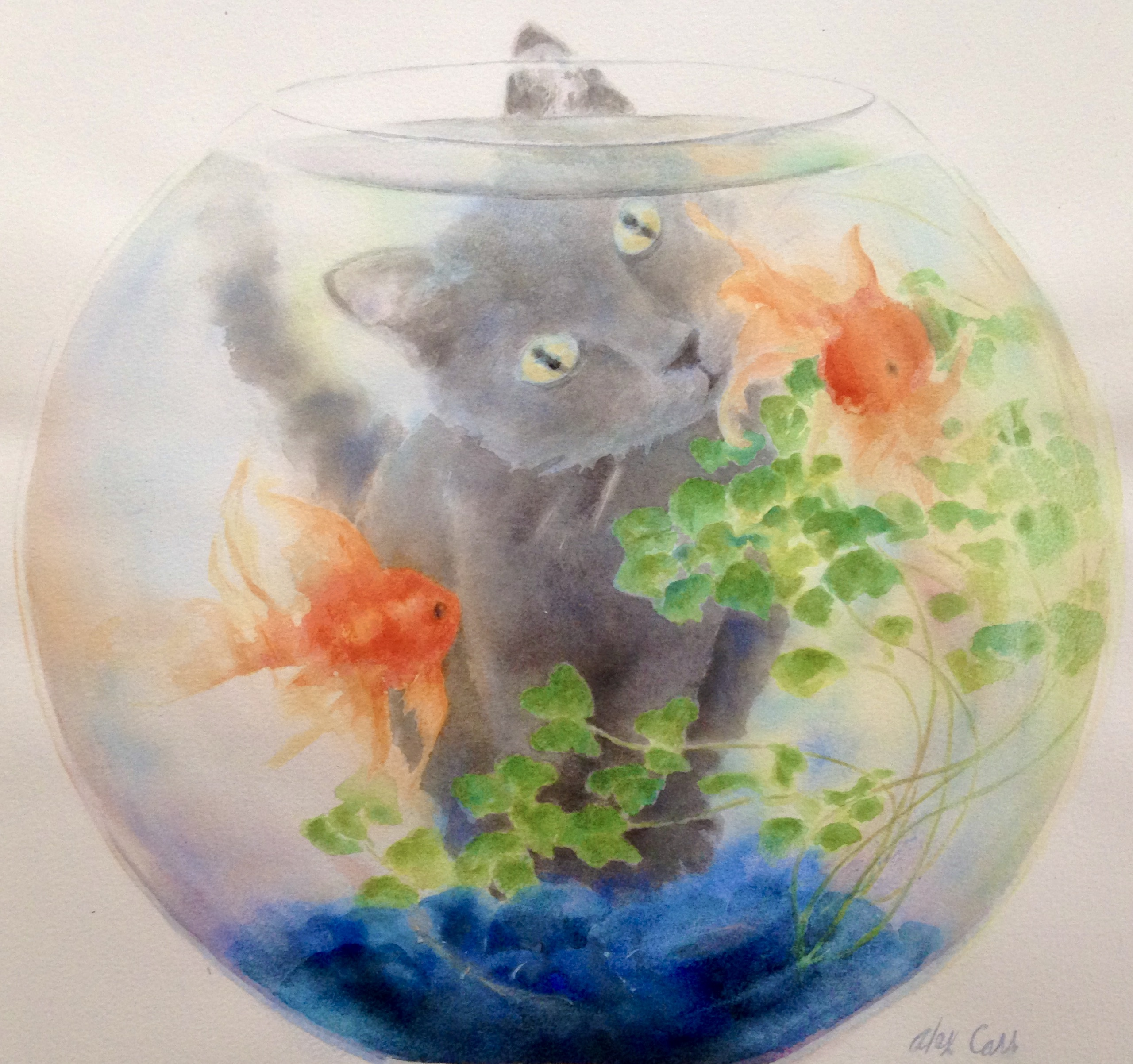 Mesmerized (goldfish bowl)