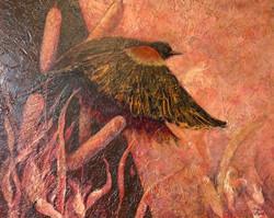 Ryan, Robyn-Red WInged Blackbird