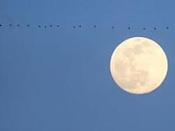 Shervin, Cheri-Moonlight Over Paris