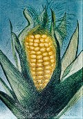 Rubin, Alan-Corn