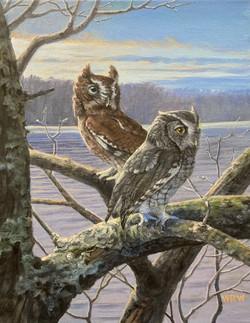 Walsh, William-Screech Owls