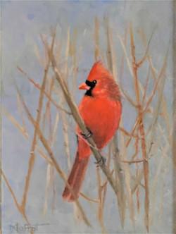Moffat_Sarita_Mr Cardinal 2_Oil_6x8